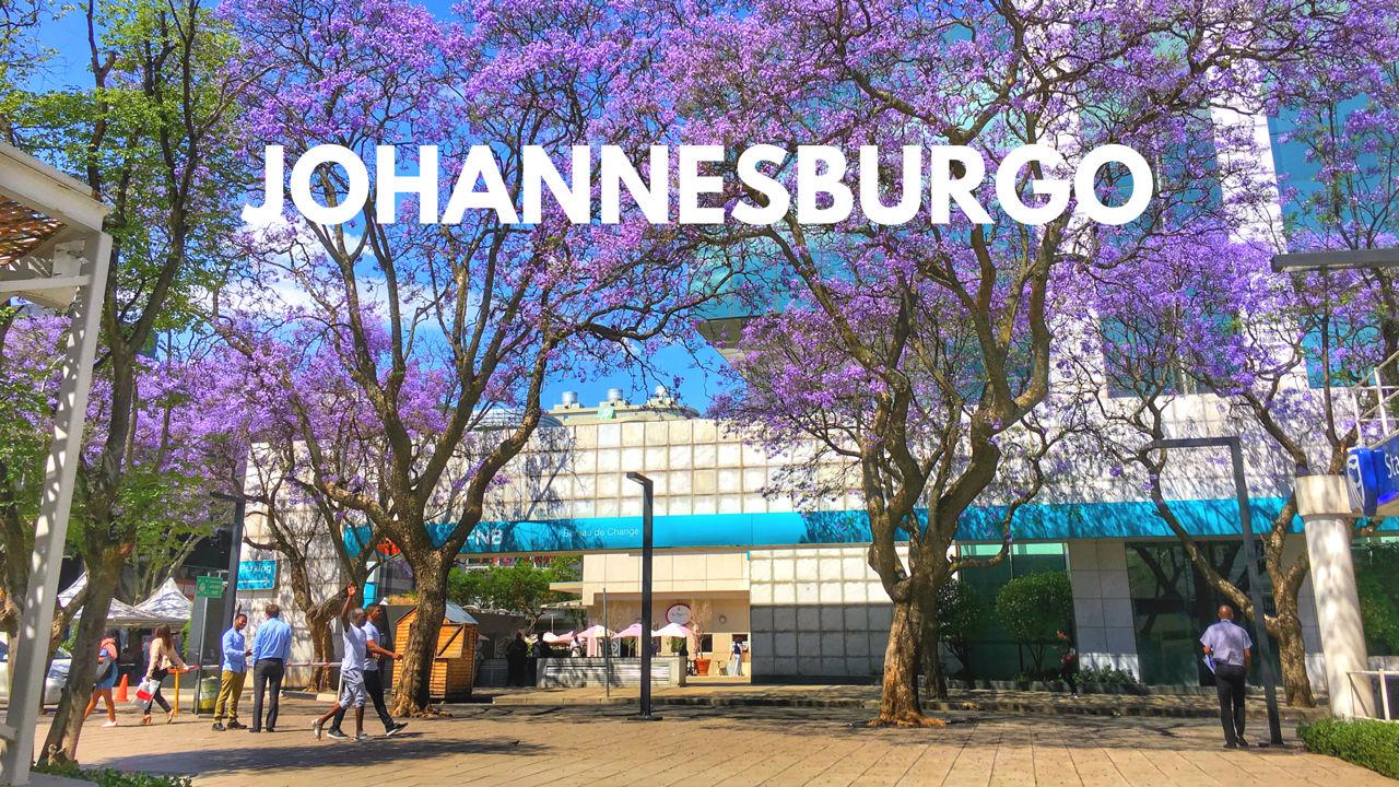 Johannesburgo, Sudáfrica – Bichito viajero