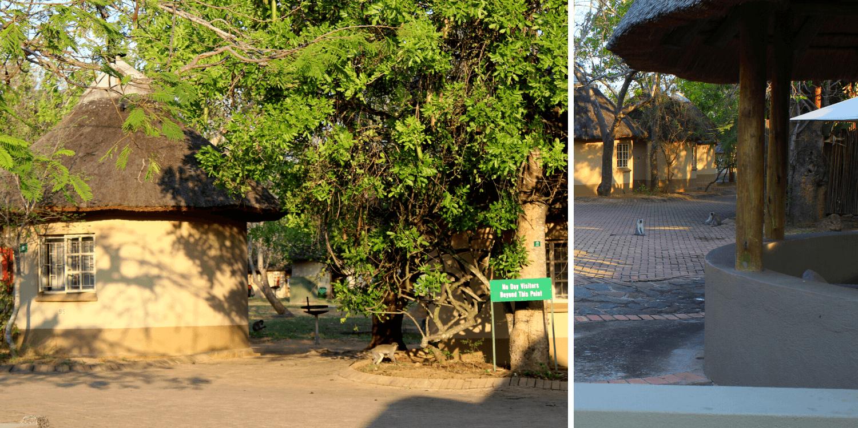 Alojamiento en el Parque Kruger en Sudáfrica - Bichito viajero