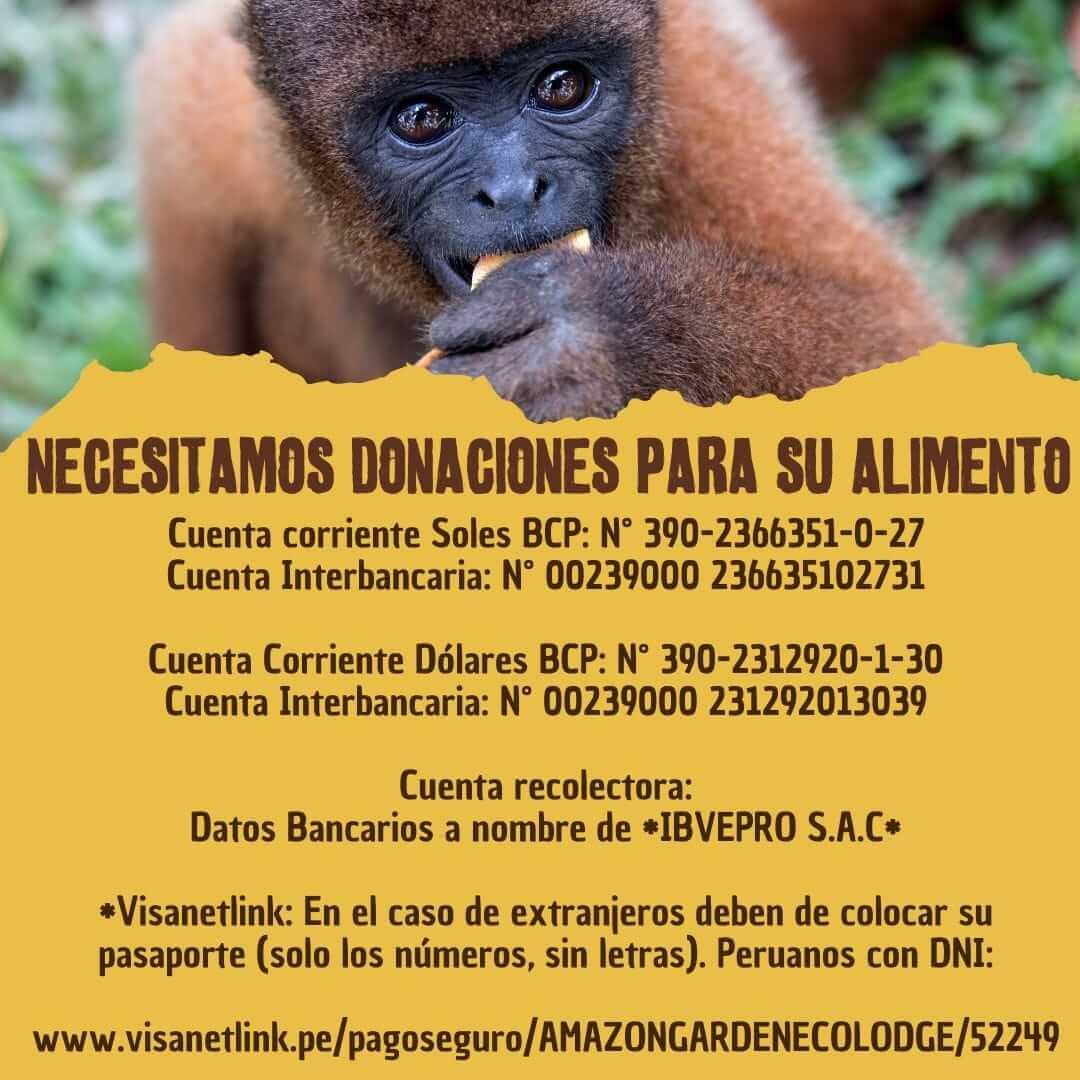 Centros de rescate en el Amazonas, ayuda por coronavirus