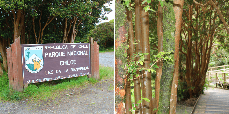 Parque Nacional Chiloé, región de Los Lagos - Bichito Viajero