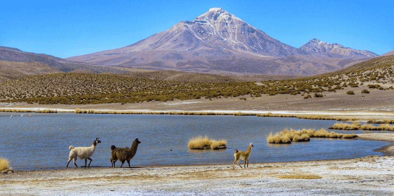 Parque Nacional Volcán Isluga, región de Tarapacá – Bichito Viajero