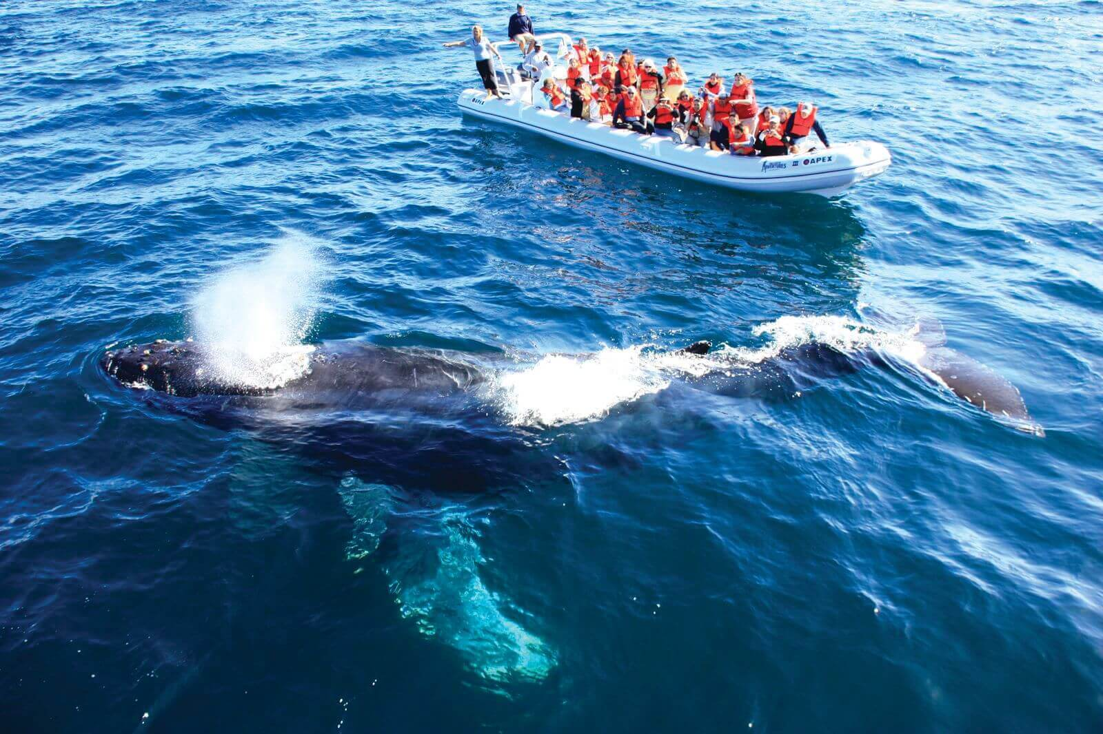 donde ver ballenas en mexico